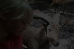 briarwood-safari-footer-bg