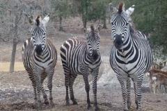 briarwood-safari-ranch-park